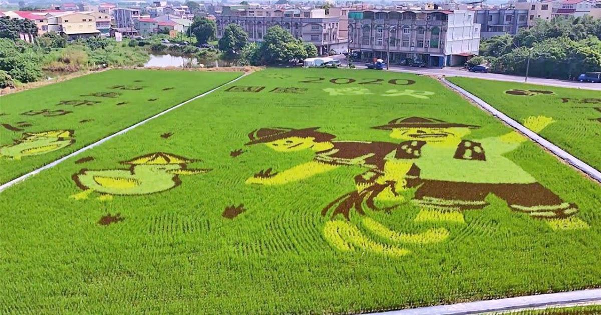 2020臺南好米季10/1登場|來後壁區農會「呷好米」觀賞美麗的彩繪稻田|活動