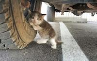 untuk anak kucing