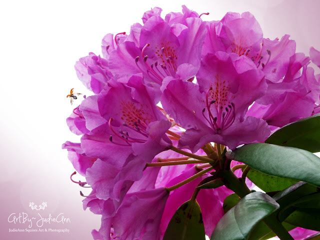Pollinators On Pink Rhododendron