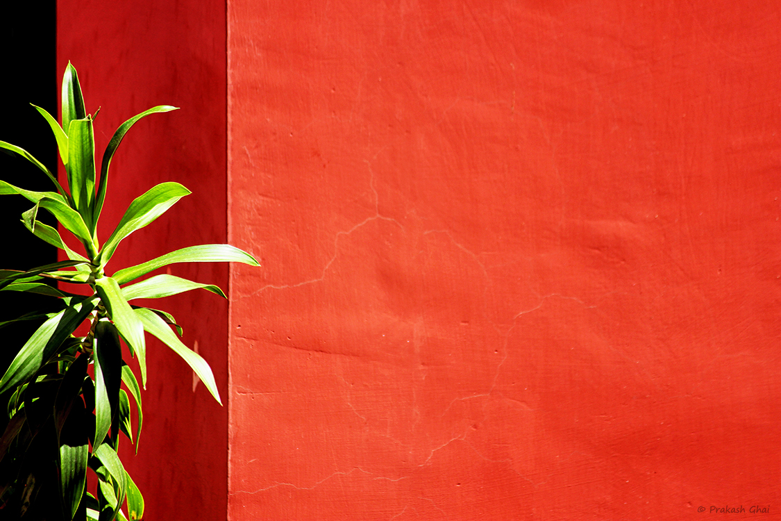 A Minimalist Photo of a Green plant against a big red wall at Jawahar Kala Kendra Jaipur.