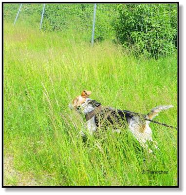 Emma rennt durchs Gras