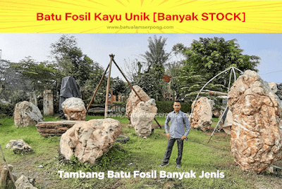 tambang batu fosil di tangerang bogor jakarta