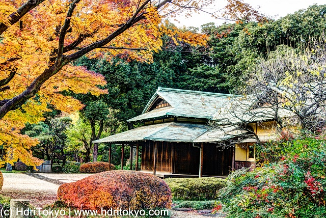an old Japanese style architecture, a Japanese maple tree with yellow leaves, a naked Ume tree