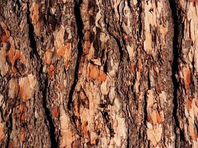 Tampa Bay Buccaneers Iphone Wallpaper Wallpaper Tree Bark Wallpapers