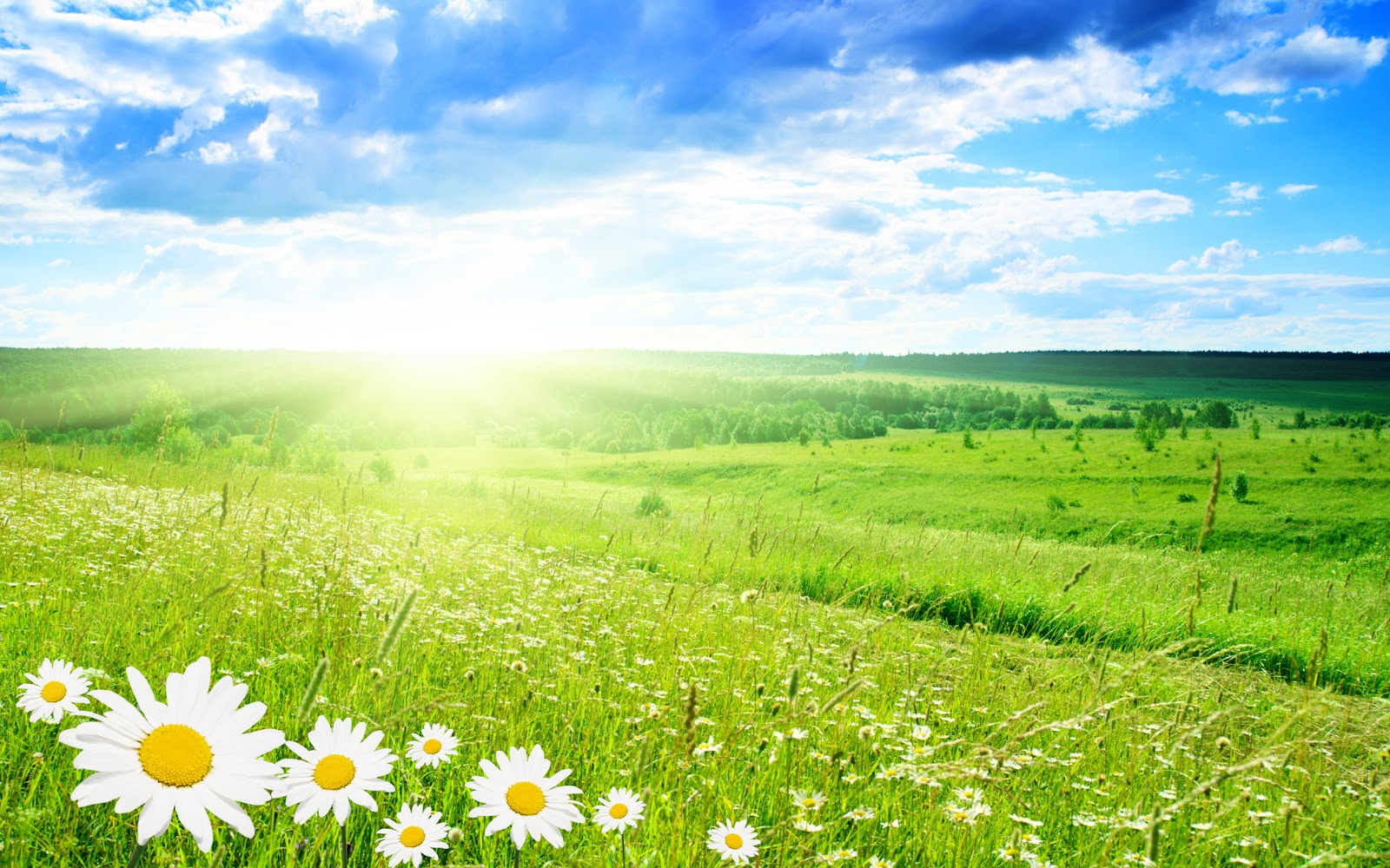 Spring season wallpapers desktop wallpapers - Free computer backgrounds for spring ...