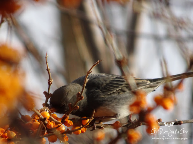 Birds & berries Photo
