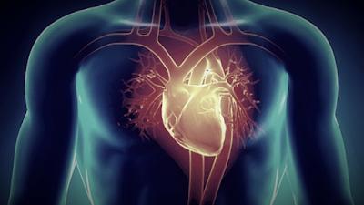 Menjaga Kesehatan Organ Jantung