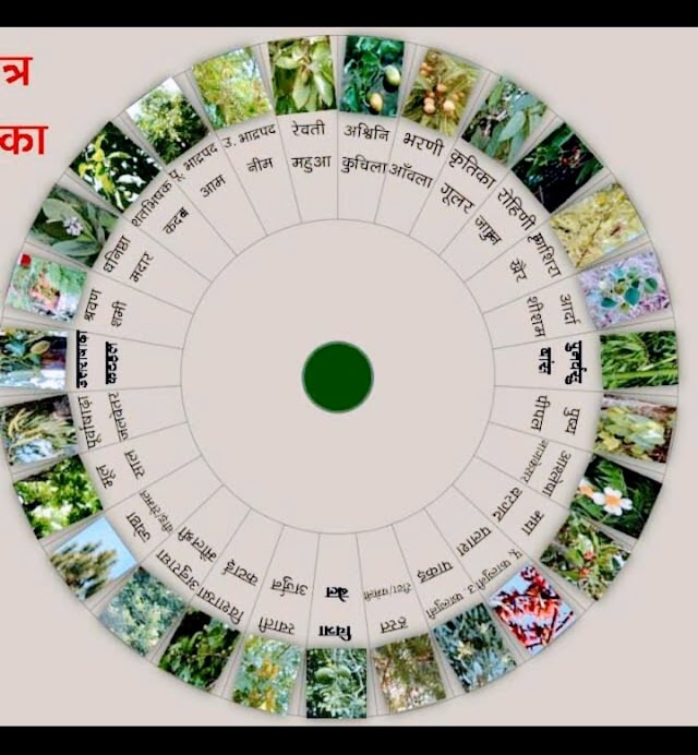 राशि के अनुसार लगाए ये पौधे और पाए जीवन की समस्या से छुटकारा