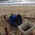 """Rescataron 50 nidos de tortuga antes del impacto del huracán """"Zeta"""""""