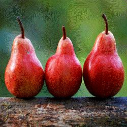 manfaat-kulit-buah-pear-untuk-kesehatan-tantirasmawati