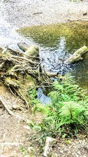 River swim at Plymbridge