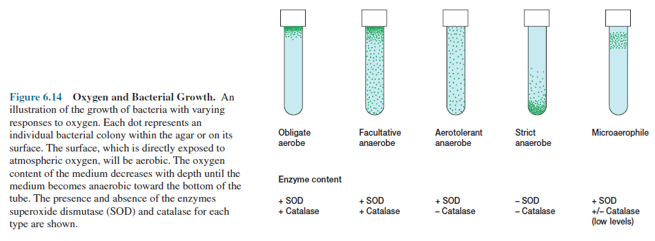 Oxygen and Bacterial Growth