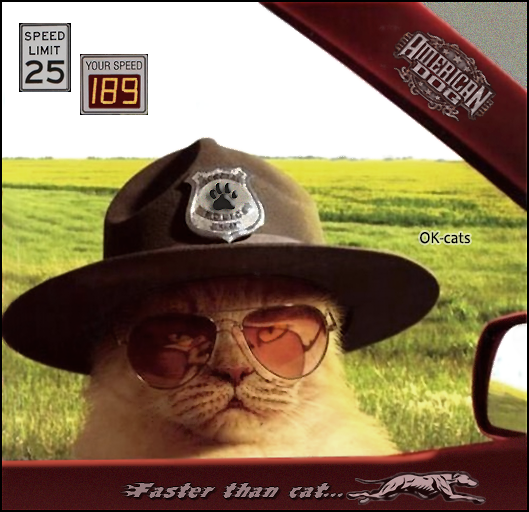 """Photoshopped  Cat picture •  Police cat: """"Speed limit: 25 - Your speed: 89 - License and registration please, Mr dog!"""""""