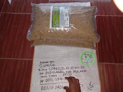 Benih Padi TRISAKTI Pesanan SUPENO Malang, Jatim  (Sebelum di Packing)