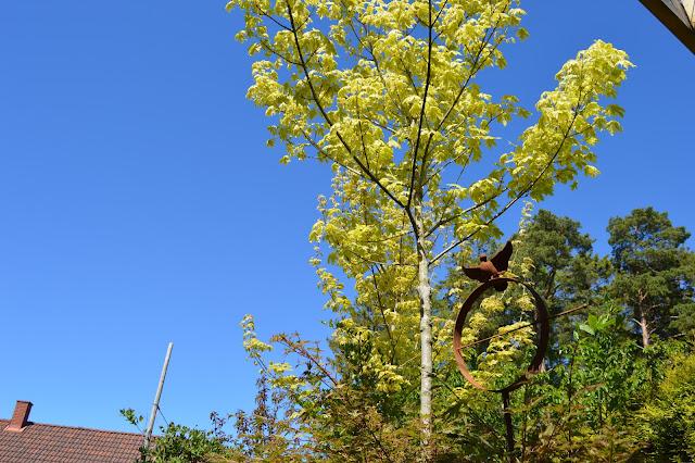 En solrik dag i Cornelias Verden - Trær er en stor del i Cornelias verden