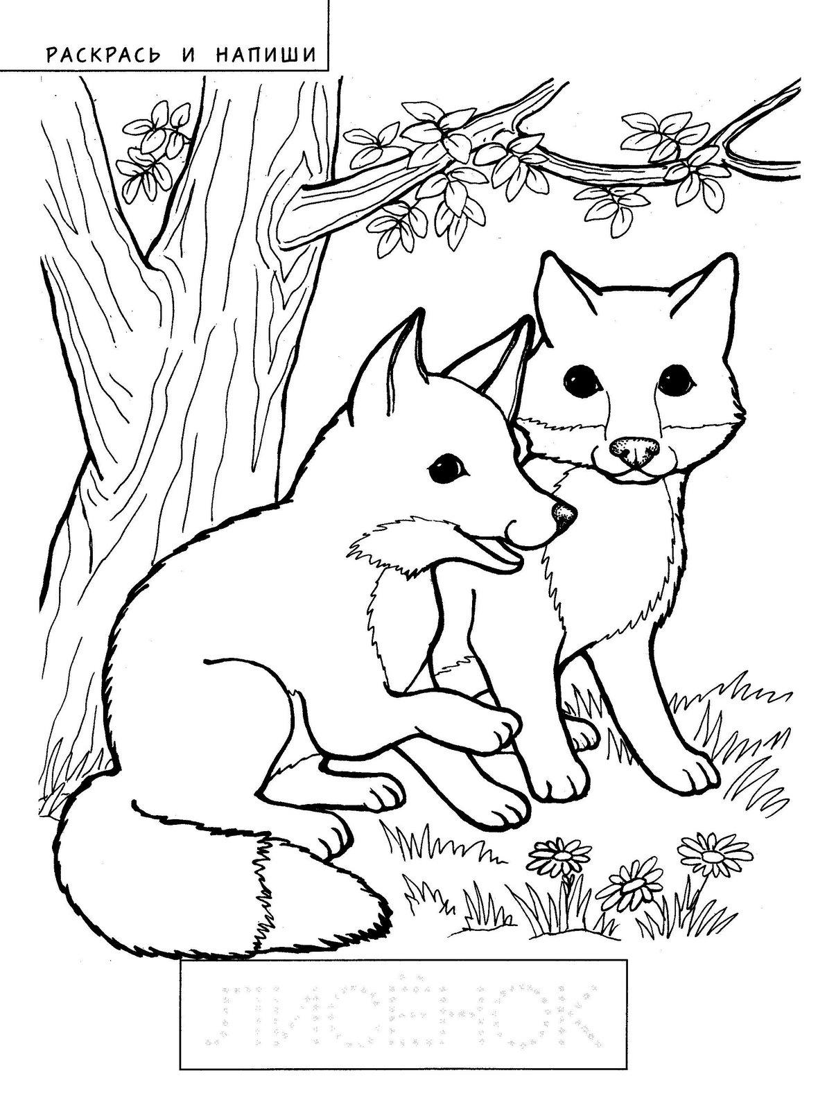 раскраска лиса и лисенок раскраски лисы и лисята