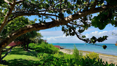 Greenspace with trees and grass overlooking the sea.