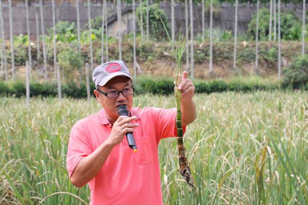 臺中農改場循環農業田間觀摩 魚茭共生資源循環利用