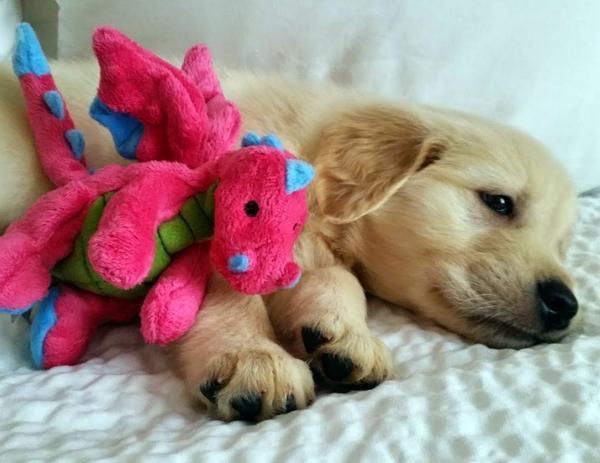 Tập đoàn cún con đáng yêu khiến showbiz loài chó chao đảo
