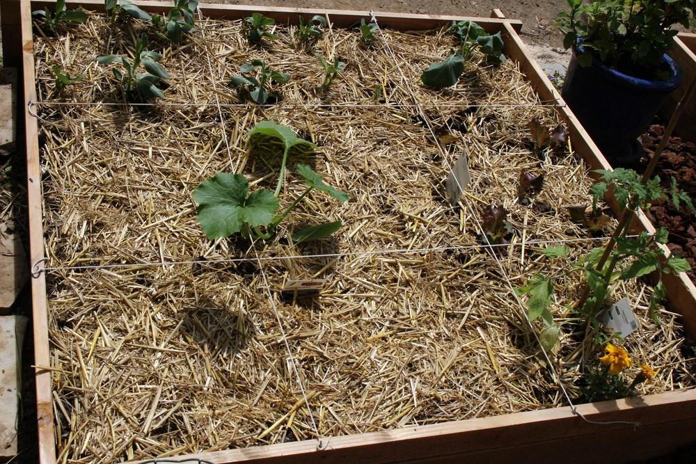 Comment planifier et cultiver un potager en carrés?