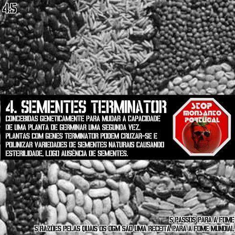 sementes terminator