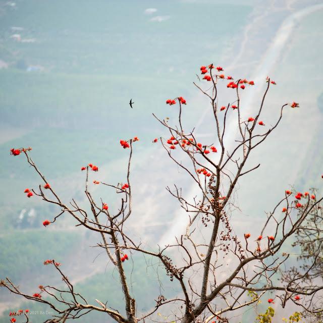 Trekking Tour Núi Bà Đen (Black Virgin Mountain)