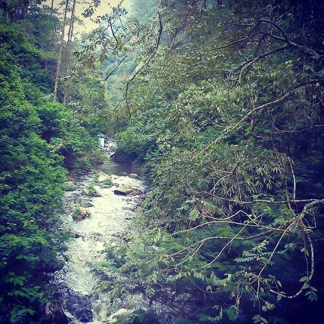 Sungai di tahura bandung