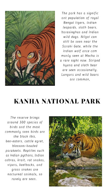 jungle book review mowgli doibedouin