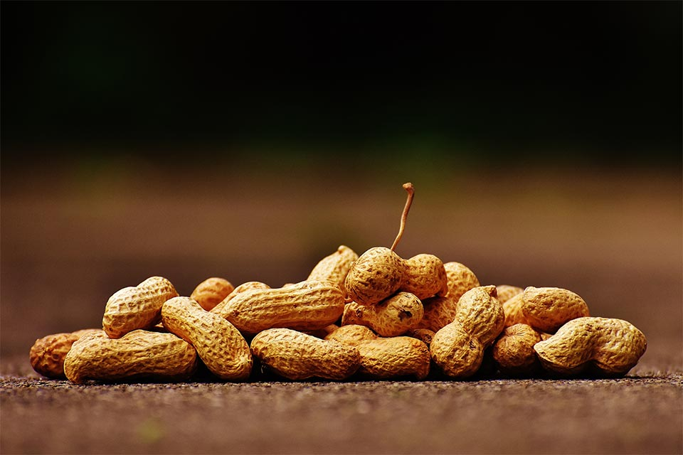 Amendoim com casca. Foto: Pexels
