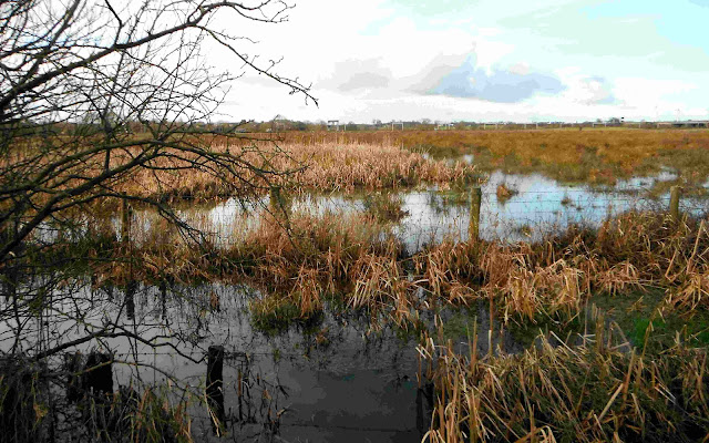Doxey Marshes, near Stafford