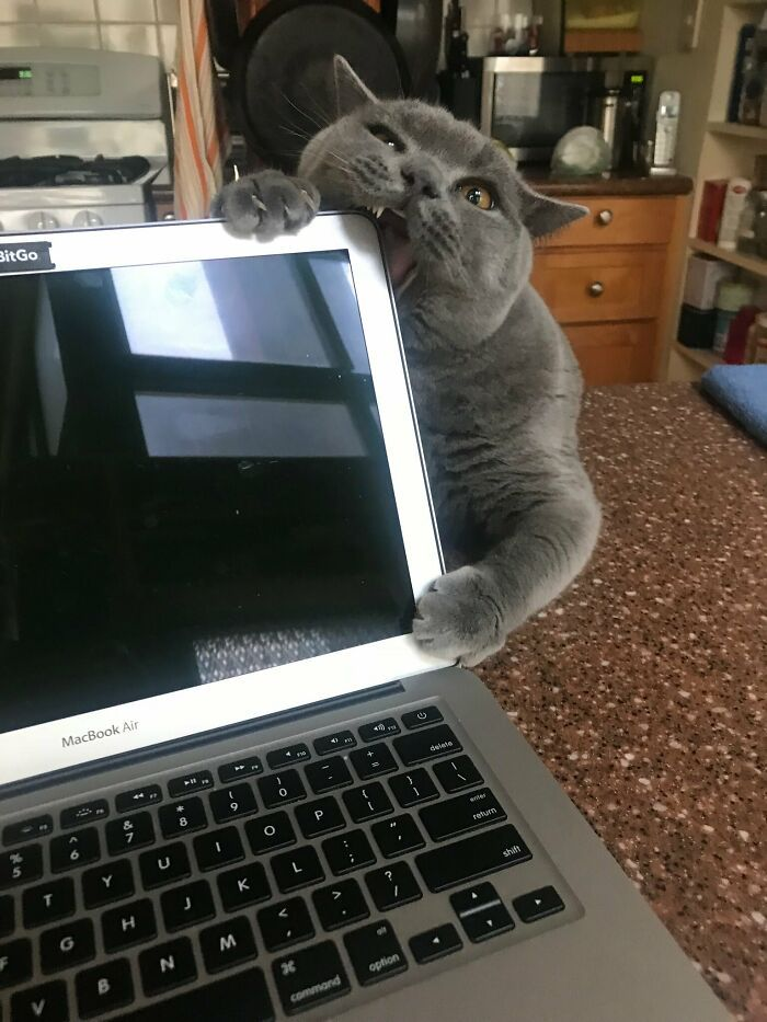 tingkah usil kucing (reddit.com/iamllamma)