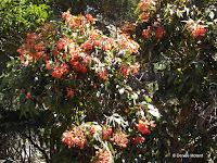 Orange flowers - Wellington Botanic Garden, New Zealand