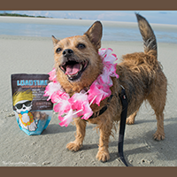 Einstein Pets Luau Time Dog Treats Review