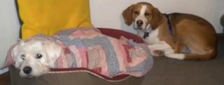 Suki Roth with her nephew Auggie, a foxhound.