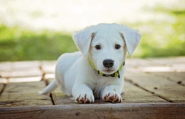 Cute unique dog names,cute male dog names