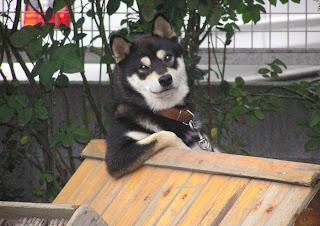 Funny Pet Wars: Dog 1 - Cat 0