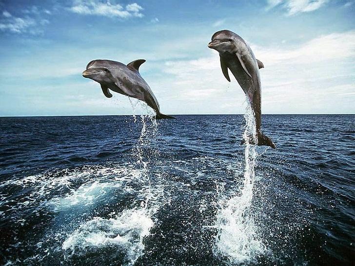 Lumba-lumba Hidung Botol, Mamalia Laut Paling Pintar