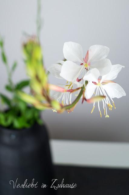 Die filigranen Blüten der Prachtkerze (Präriekerze)