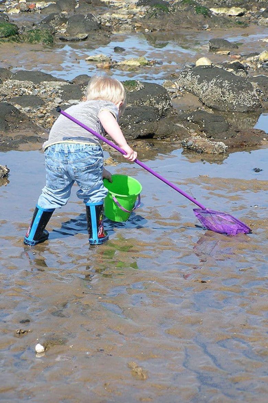 tide pool scavenger hunt for kids
