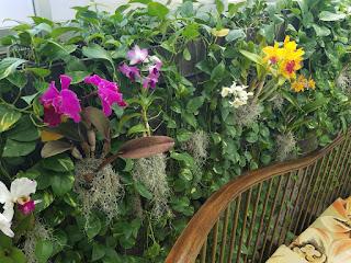 Row of orchids - Kahala Hotel, Oahu, HI