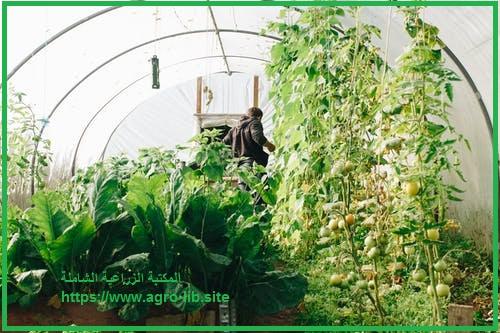 سؤال و جواب في التسميد : ما هي مواعيد وطرق إضافة الأسمدة الحيوانية والكيمياوية لبساتين الفاكهة ؟