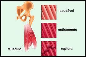 fibra de músculo de cães