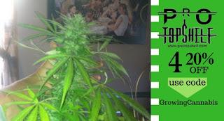bakhnj%2B550 - Does Cannabis Cure Cancer?