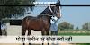 घोड़ा सोता क्यों नहीं, हमेशा खड़ा क्यों रहता है, बैठता क्यों नहीं / GK IN HINDI