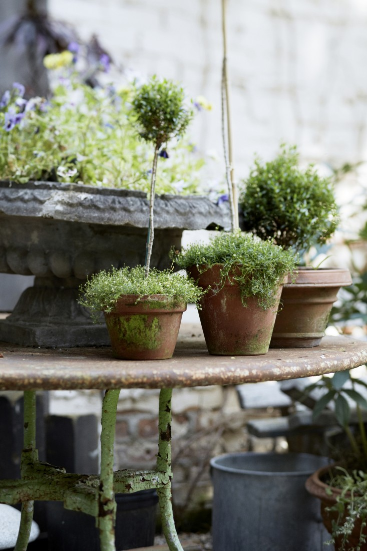 Aged vintage iron table with topiaries in #Frenchgarden on Hello Lovely Studio