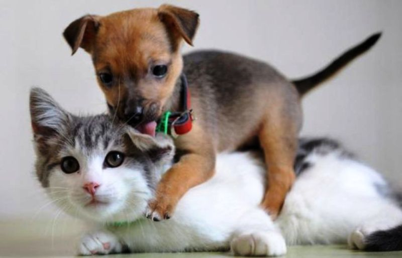 Funny Pic Of Cat And Dog