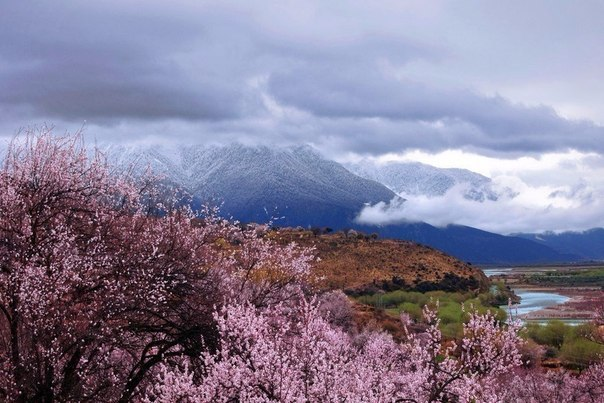 Tibet Landscape pink nature