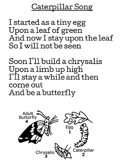 Butterflies in First Grade: Free Butterfly Poems.  GradeONEderful.com