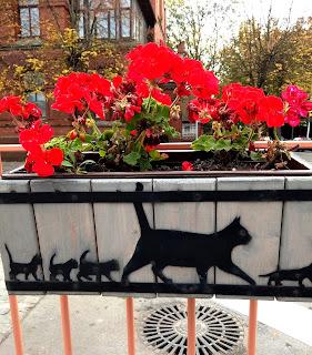 ЗЕЛЕНОГРАДСК - город кошек. Октябрь 2021г.