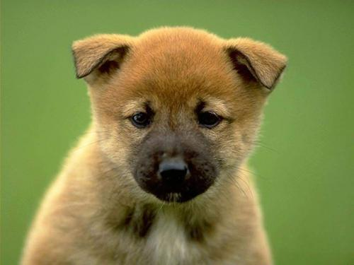 Cute Dogs And Puppies Wallpaper For Mobile Online Wallpapers Shop Cute Puppy Pictures Puppy